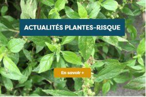 actu-plantes-risque